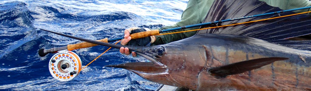 banner image - fishing and spearfishing